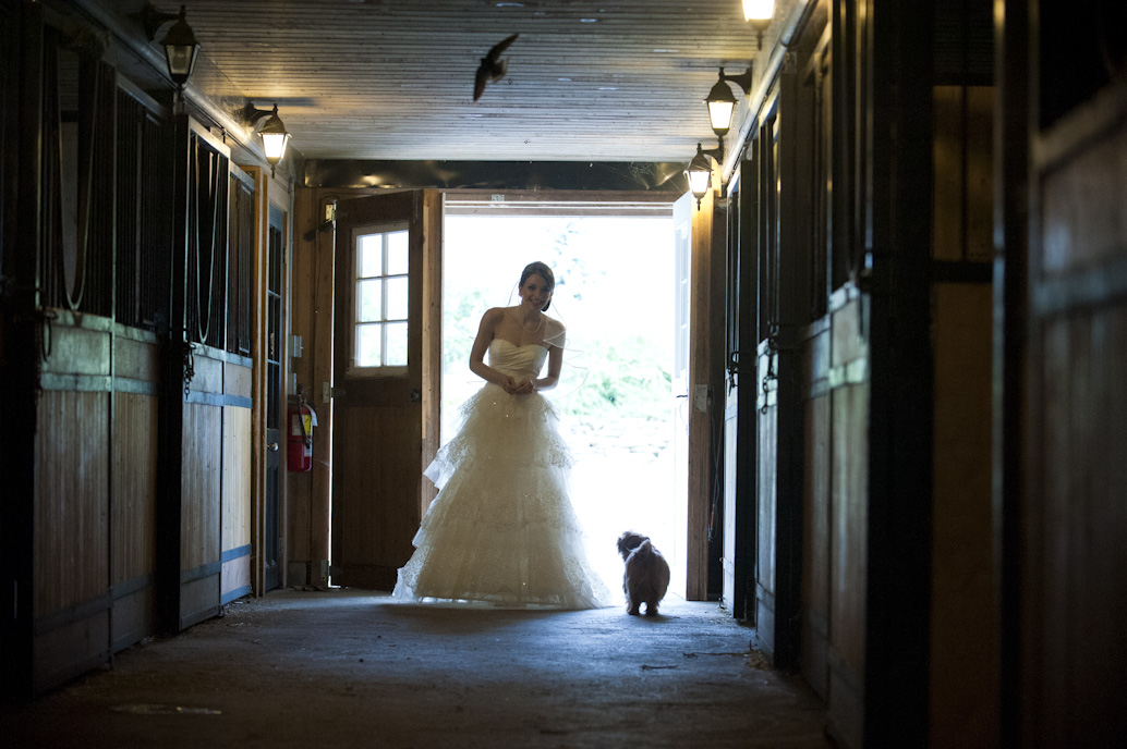 wedding photographer: Abelle